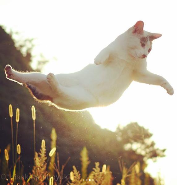 Me encantan los saltos Ninja, me hacen un gato único
