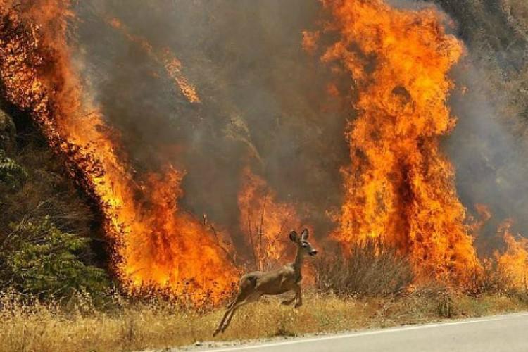 PACMA presenta el plan de evacuación para animales ante una catástrofe