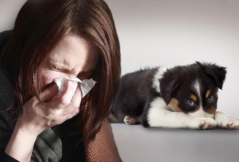 ¿Por qué las personas tenemos alergia a perros y gatos?