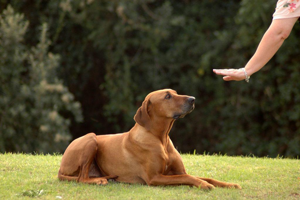 Problemas durante el adiestramiento canino