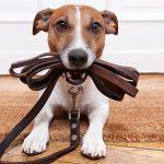 problemas-durante-el-adiestramiento-canino