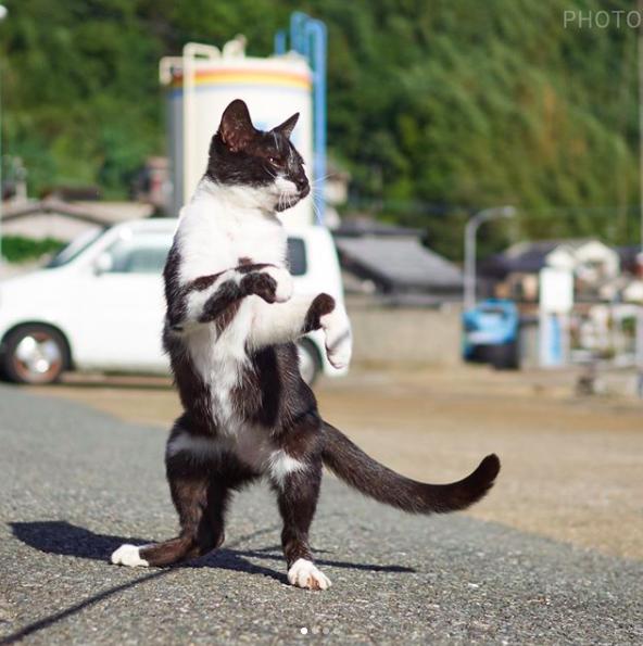 Soy un gato karateca