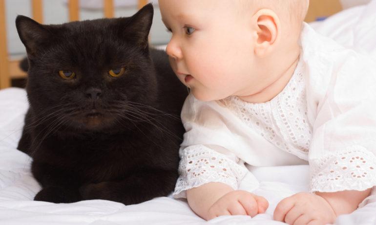 Tener un gato en la familia podría disminuir el número de niños asmáticos