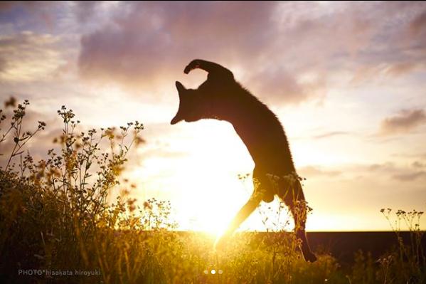 Un gato negro bailando en el atardecer