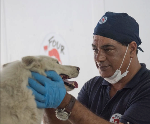 veterinario que rescata a los animales de las guerras