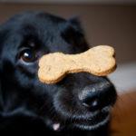 chucheria para perros hueso