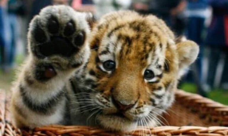 cinco peticiones dia derechos de los animales