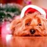 cuidados de un perro en navidad