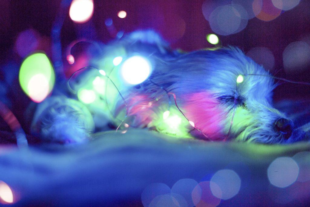 Los cuidados de un perro en navidad
