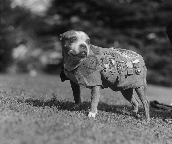 El Sargento Stubby- El perro de la Primera Guerra Mundial