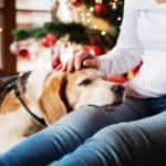 Fin de año con mascota precauciones que debemos tomar