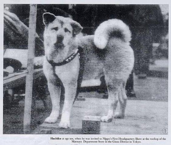 Hachiko: El perro más fiel de la historia
