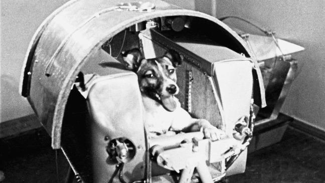 Laika - la perrita que sacrificó su vida para hacer posible el viaje espacial