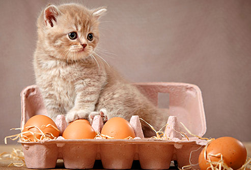 Los alimentos que pueden comer los gatos de nuestra cena