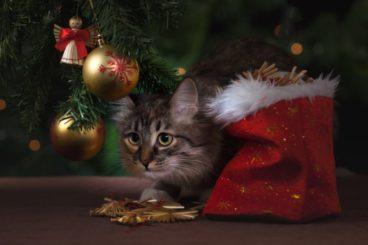 los-cuidados-de-un-gato-en-navidad