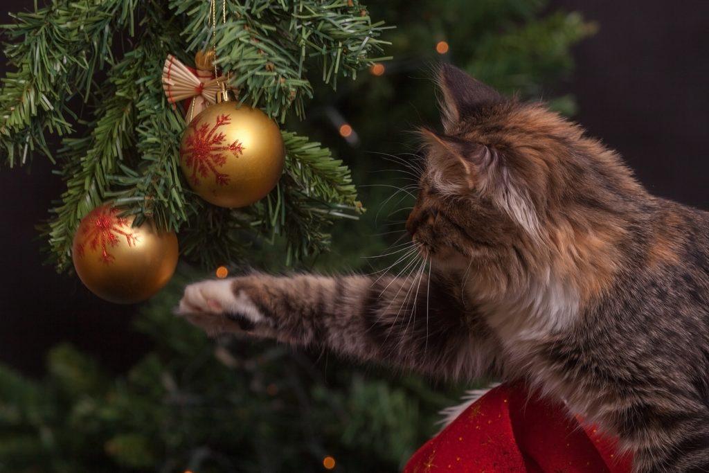 Los cuidados de un gato en navidad_peligros del árbol de navidad