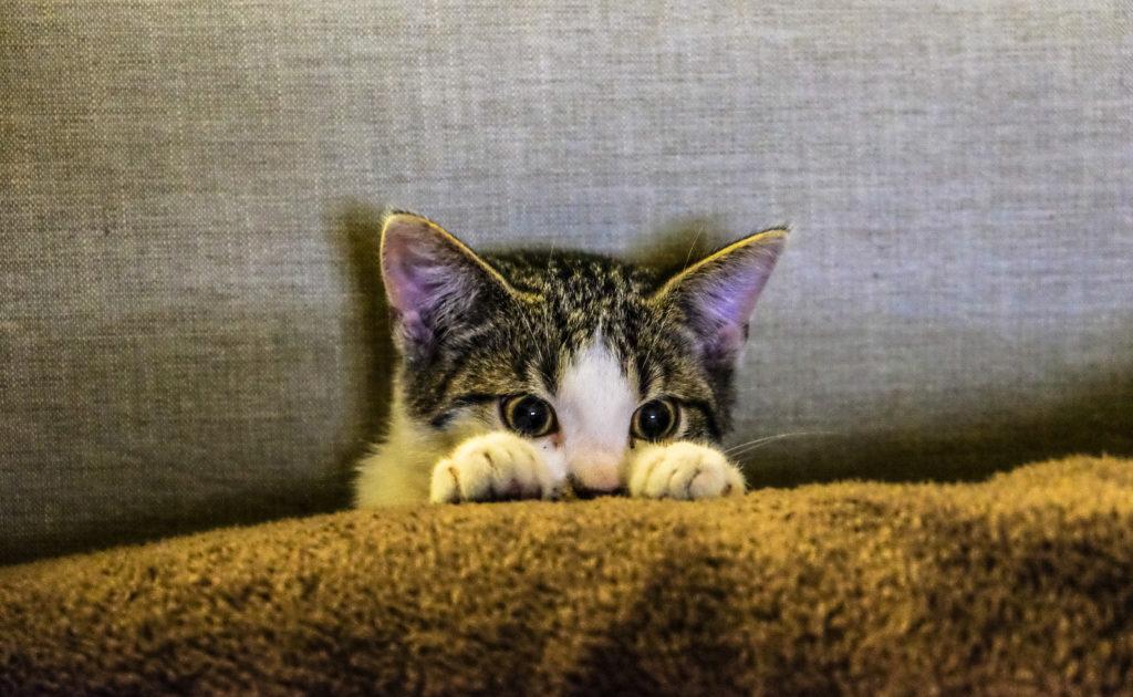 Los cuidados de un gato en navidad_Espacios tranquilos