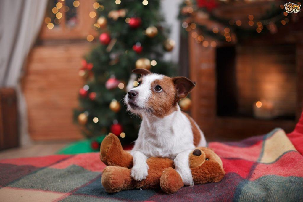 navidad chucheria para perros
