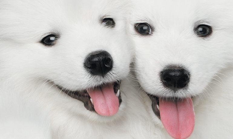 Por 40.000 euros esta compañía de Texas puede clonar mascotas