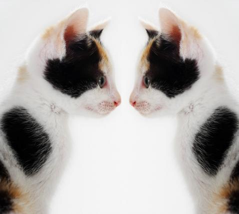 Proceso para clonar mascotas