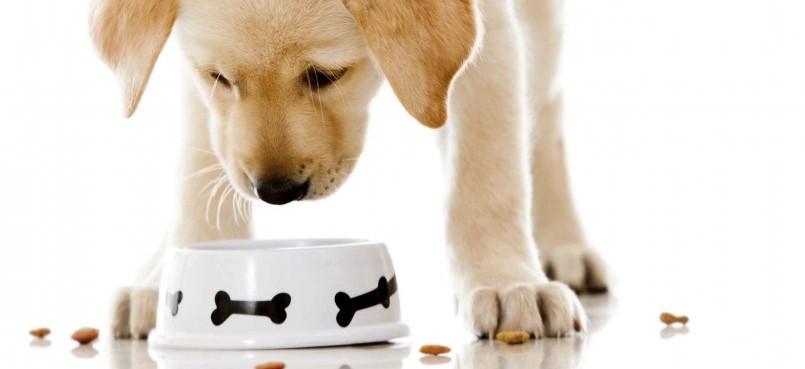 que pueden comer los perros en navidad