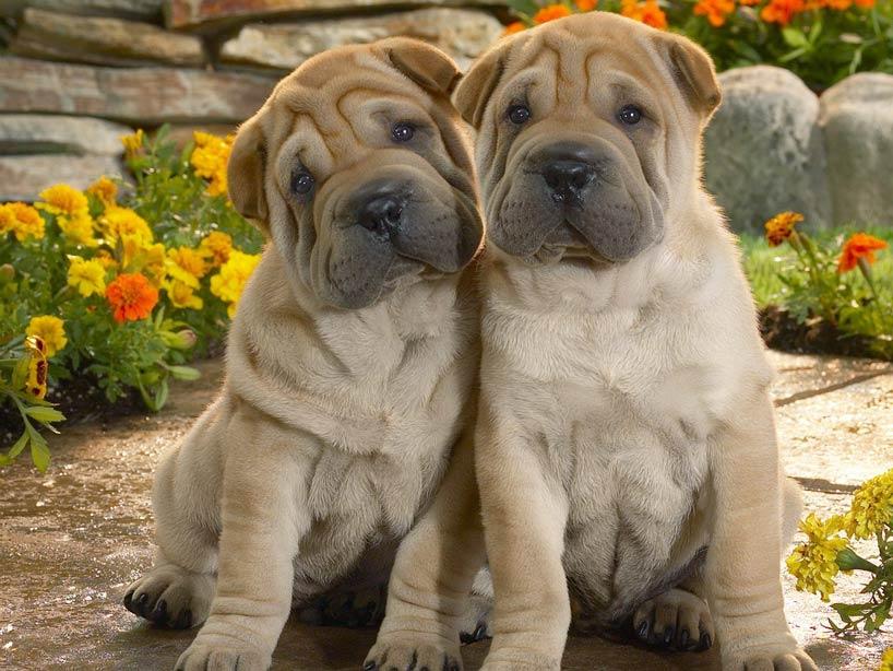 Las razas de perro más divertidas