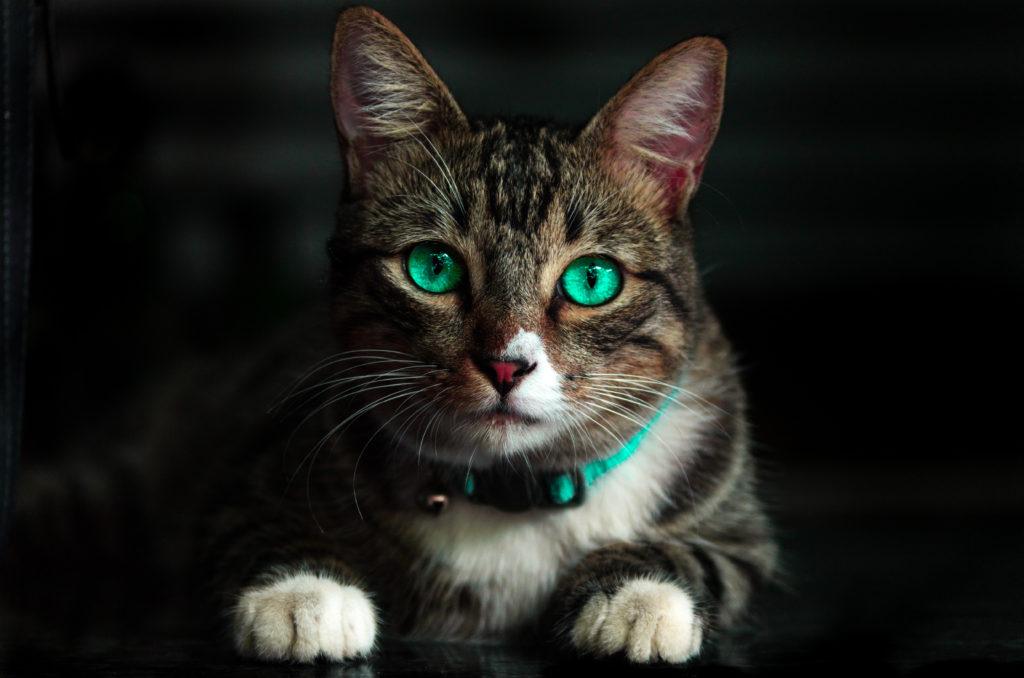 nombres para gatos originales