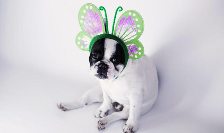 11 Disfraces que querrás ponerle a tu perro estos carnavales