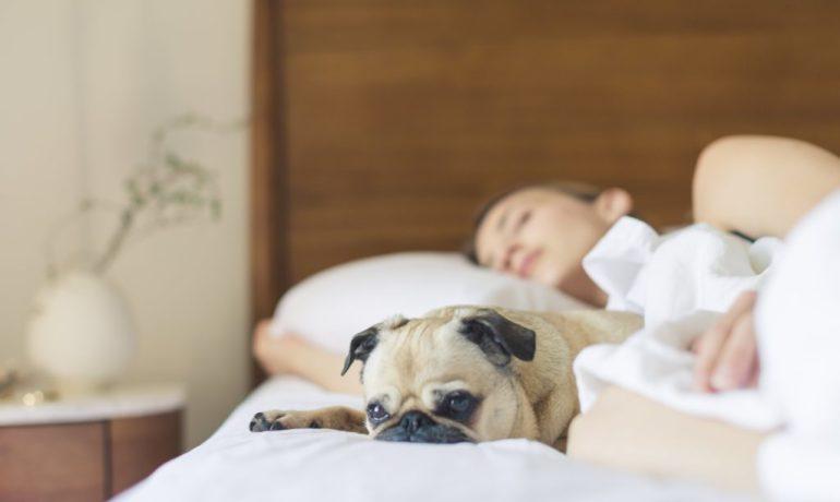 20 cosas que no sabias sobre perros