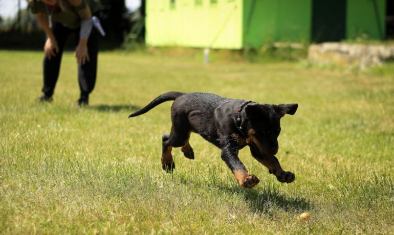 Claves para el adiestramiento canino en positivo
