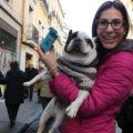 La fiesta de San Antón, el día grande de las mascotas