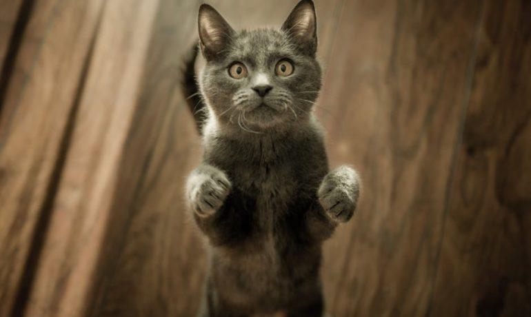 Objetos peligrosos para los gatos que puedes encontrar en tu casa