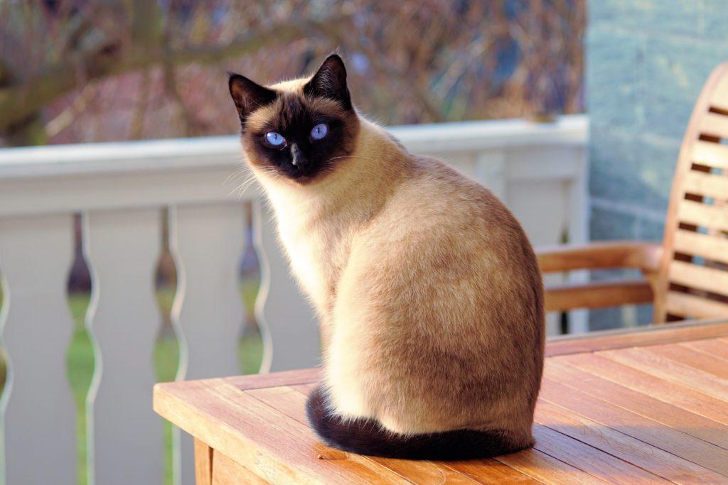 El Gato: Independiente y cariñoso