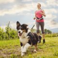 Las razas de perros que más beneficios tienen para las personas y que más daño hacen a los canes
