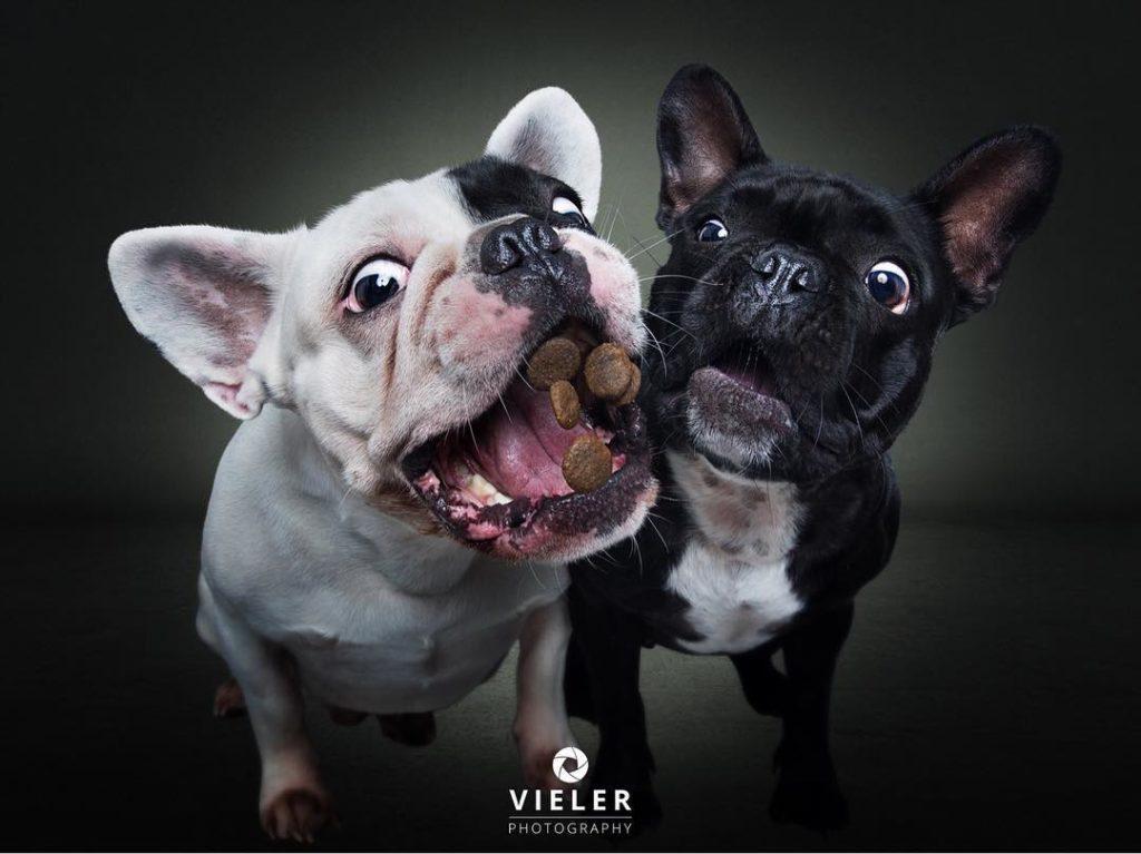 dos perros con premios
