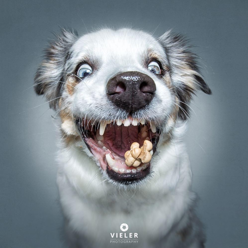 perro atrapando premio