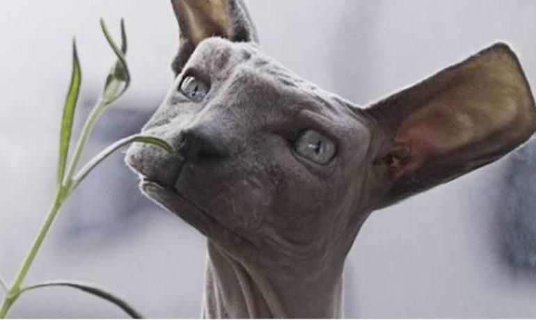 Animales Con Formas Geométricas Descúbrelos Wakyma
