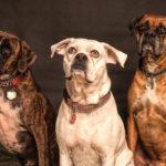 Hay 8 tipos de perros según sus personalidades