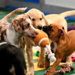 puppy bowl concienciacion animal