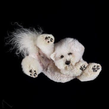 perro visto desde abajo foto nadir