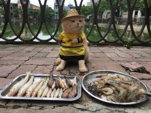 Dog vendiendo pescado mercado