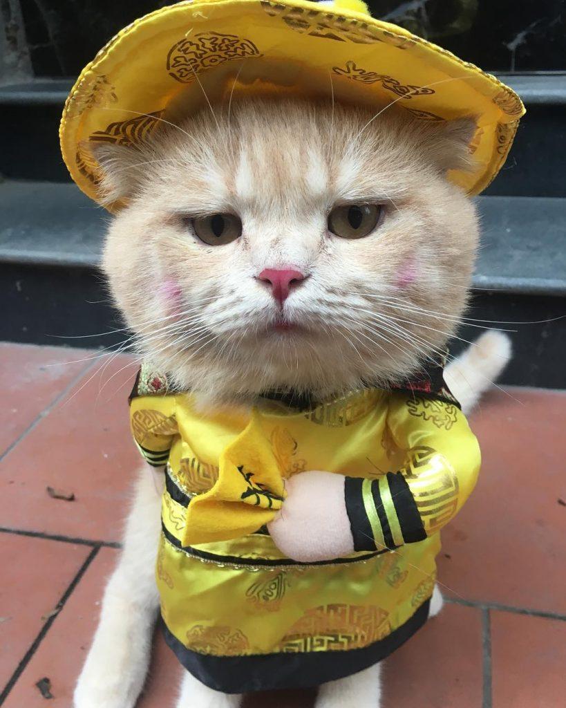 vendedor gato en vietnam