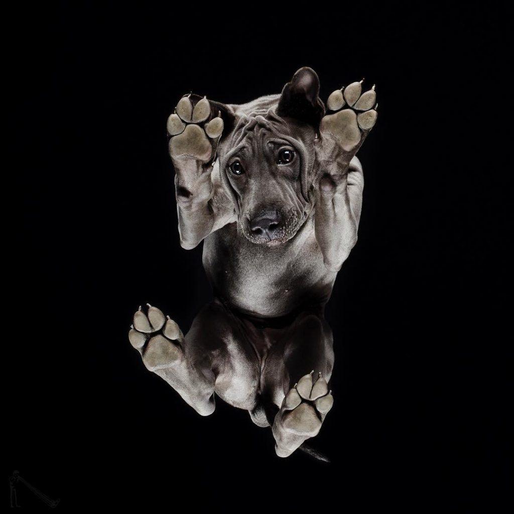 perro desde abajo mirando foto