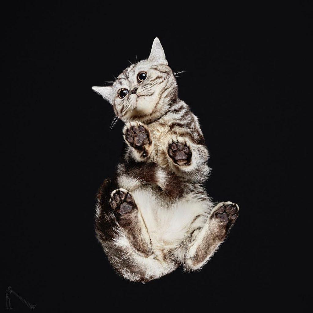 gato desde abajo foto