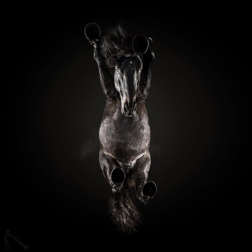 caballo desde abajo foto