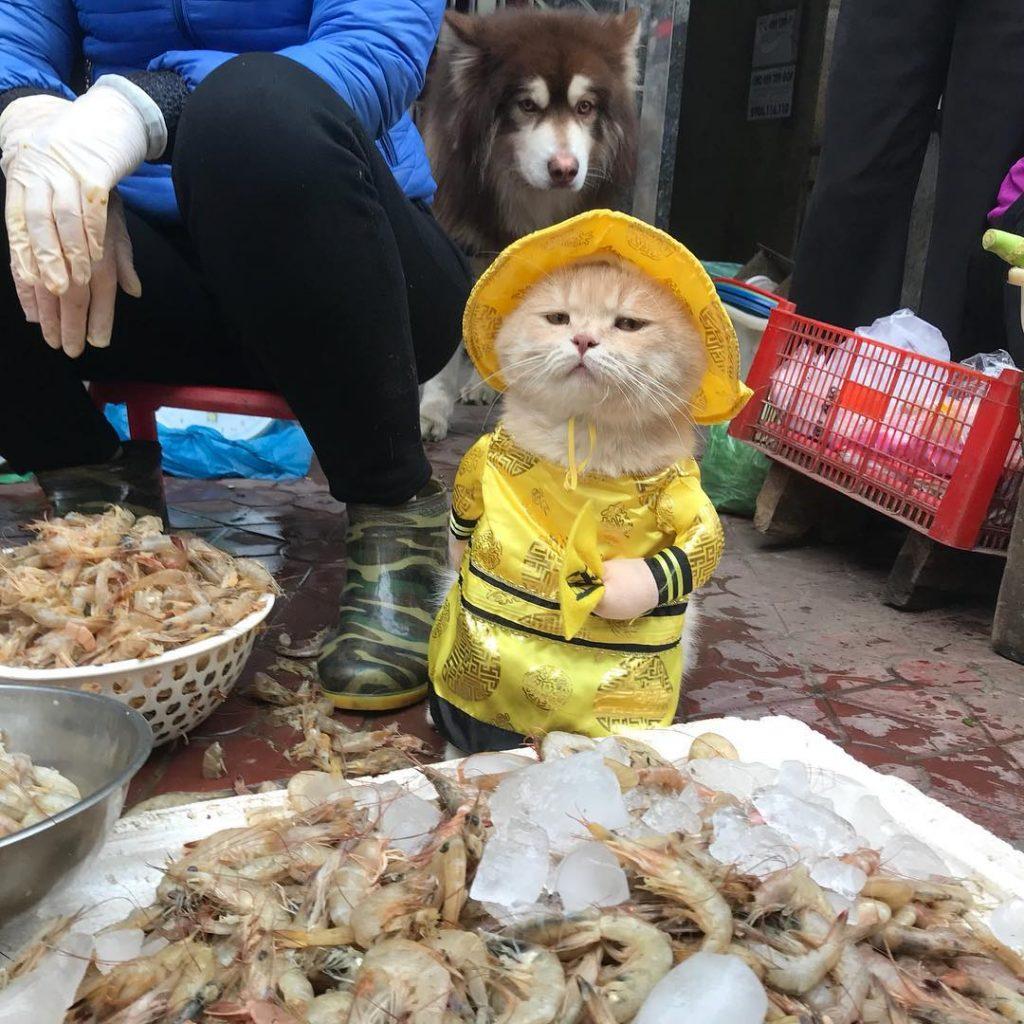 gato vietnam mercado