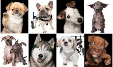 fotos de perros discapacitados