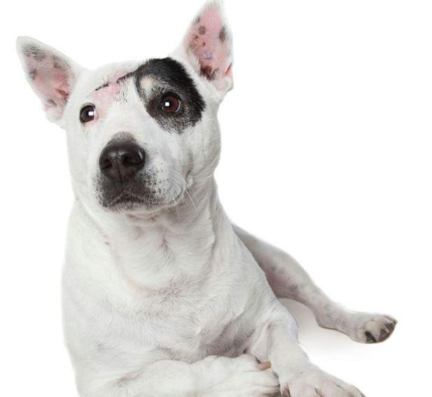 perros discapacitados acido