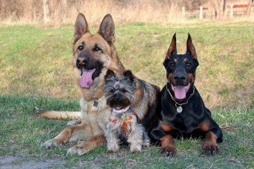 personalidad de los perros raza