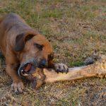 carne cruda para perros